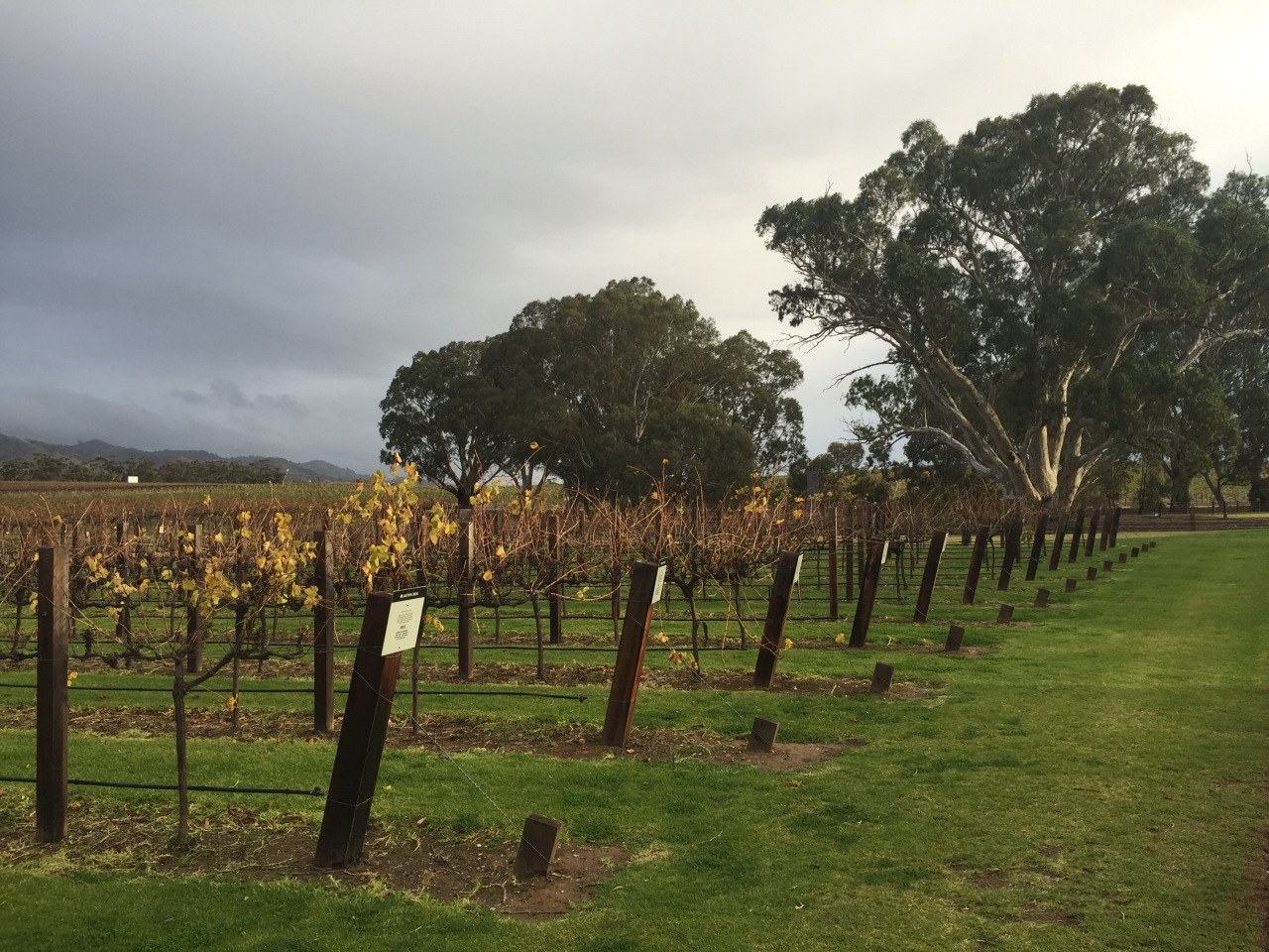 Wine tours from Mclaren Vale to Barossa Region